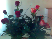 Růžičky od Mišáka